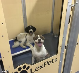 Dog Boarding and dog day care in Lexington KY